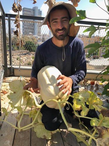 דלעת במשקל 7 קילו שגידלנו בגג במרכז תל אביב