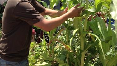 ללמוד לגדל מזון