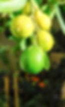 ירקות שגדלו במרפסת