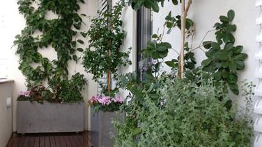 גידול ירקות בגינה
