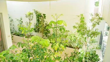 גינה ירוקה תל אביב