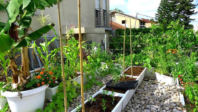גינת ירק שופעת על גג חניה פרטית