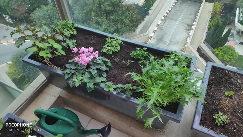 גינת מאכל במרפסת מוצלת