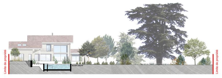 Création d'un jardin contemporain autour d'un cèdre bicentenaire Coupe