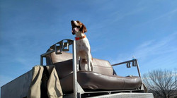 Quail Hunting Partner