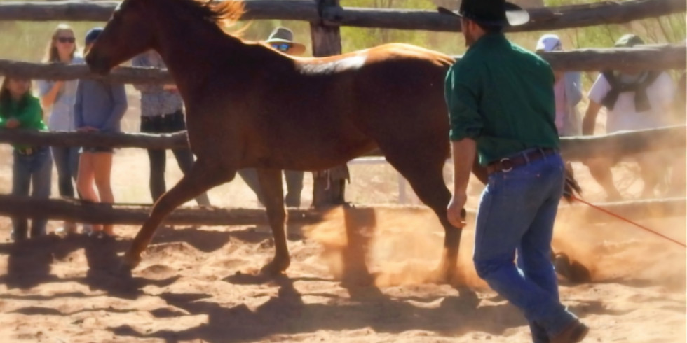 The Outback Horse Show