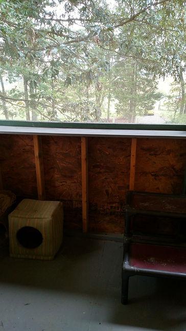 Cat porch.jpg