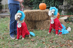 Thing 1 and 2 s