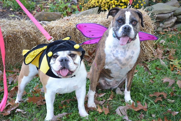 Bella and Kaila as a Bumblebee and Butte