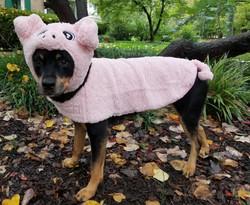 Kindle Culhane Miss Piggy