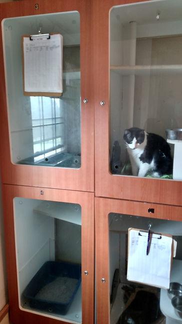 cat crates.jpg