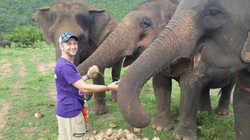 Taking care of neglected elephants