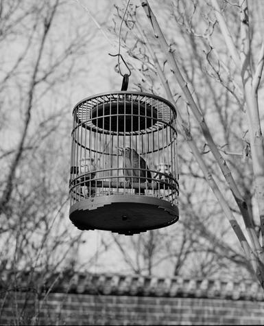 Bird walking 2.jpg