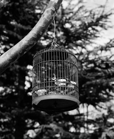 Bird walking 4.jpg
