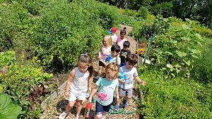 Little Earth Shepherds garden.jpg