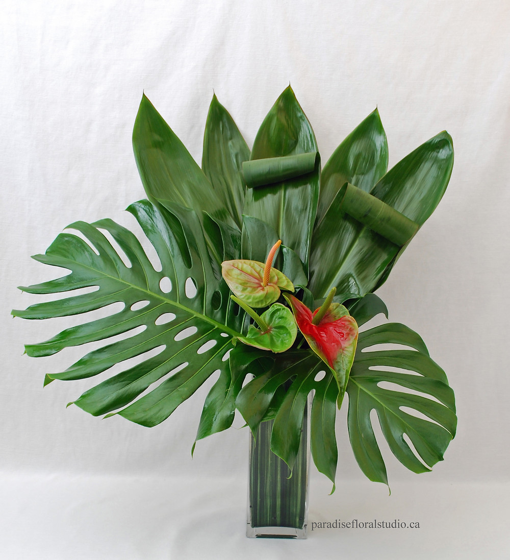 Modern tall anthurium