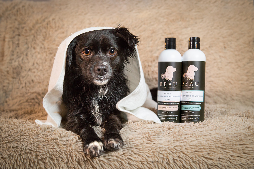 Tikka with her favourite dog shampoo: BEAU Canine Essentials