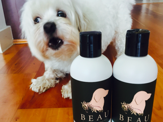 How to Choose a Natural Dog Shampoo in Vancouver