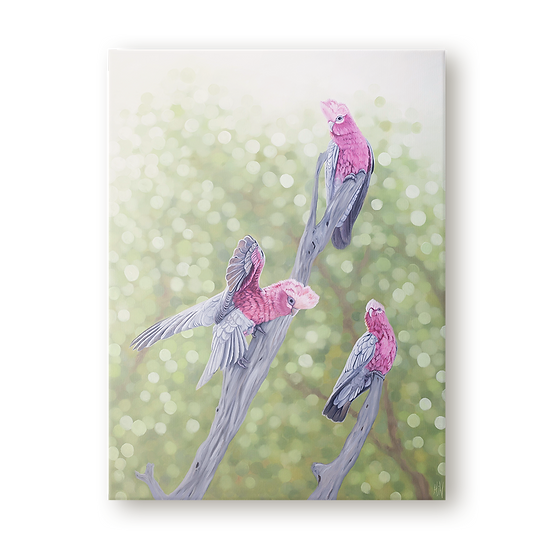 The Galah Trio Original Oil Painting