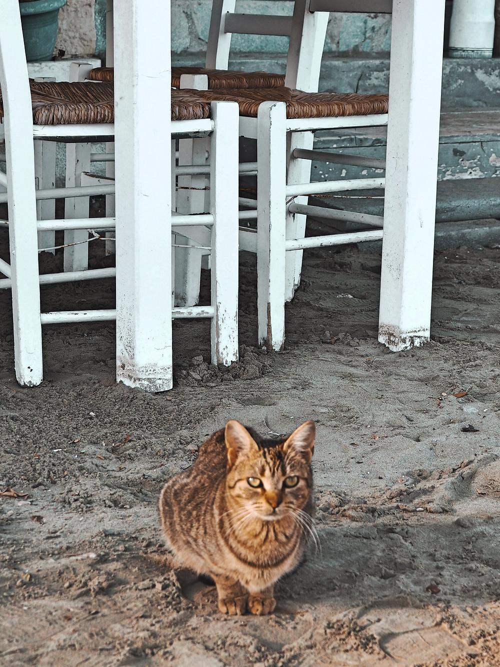 gato, playa, arena, felino