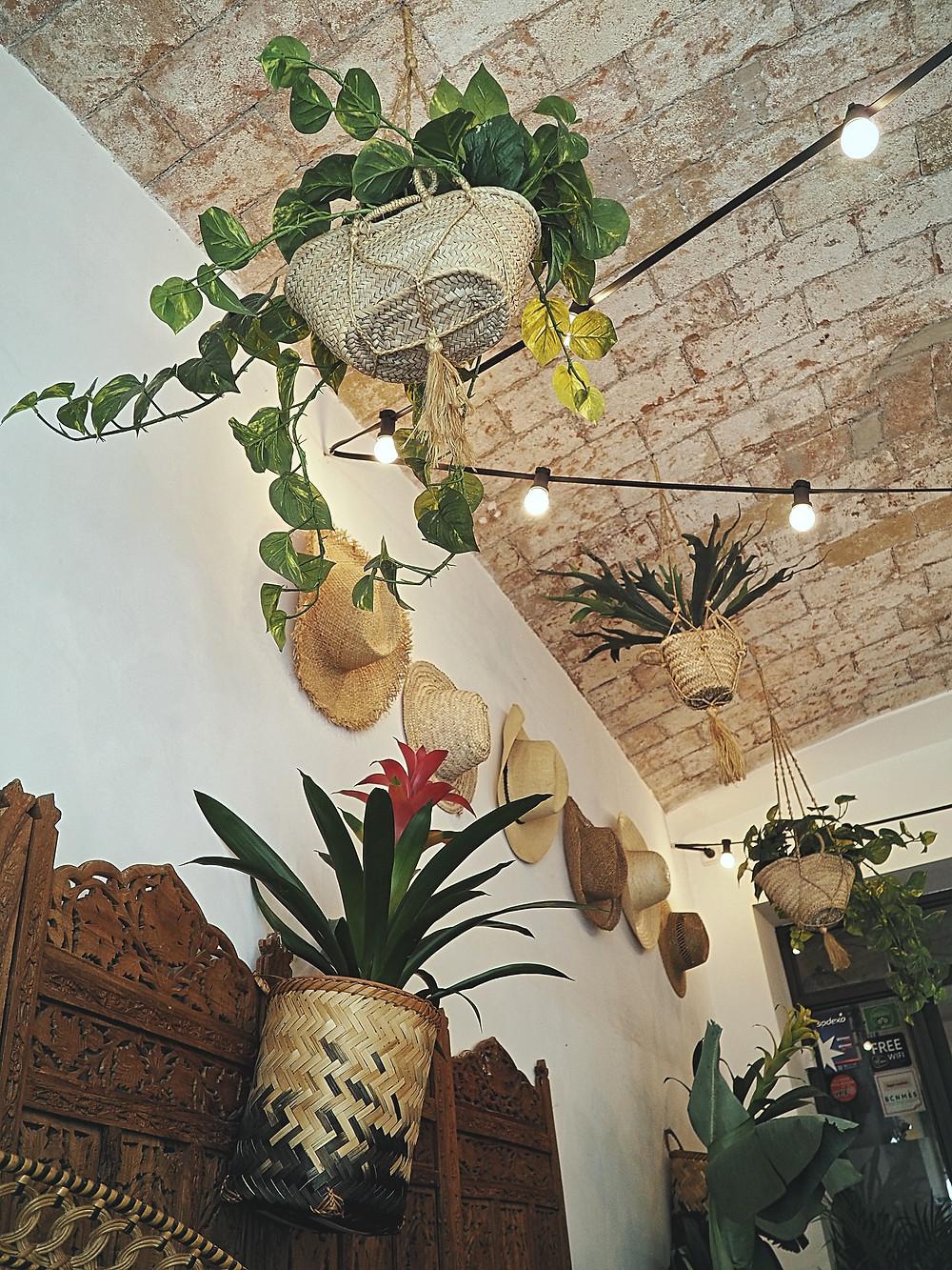 brunch tropical, Barcelona, trópico, gastrocuentos, plantas, salvaje, viajar