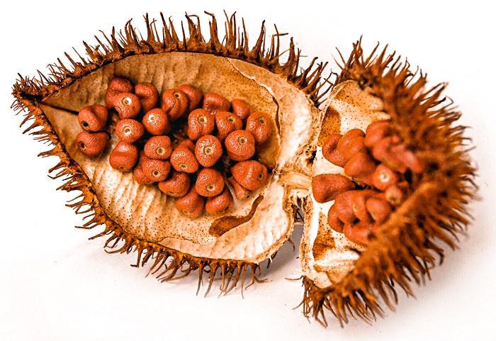 achiote, colorante, México, cochinita pibil