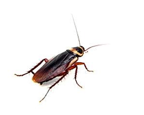 Secret life of cockroaches