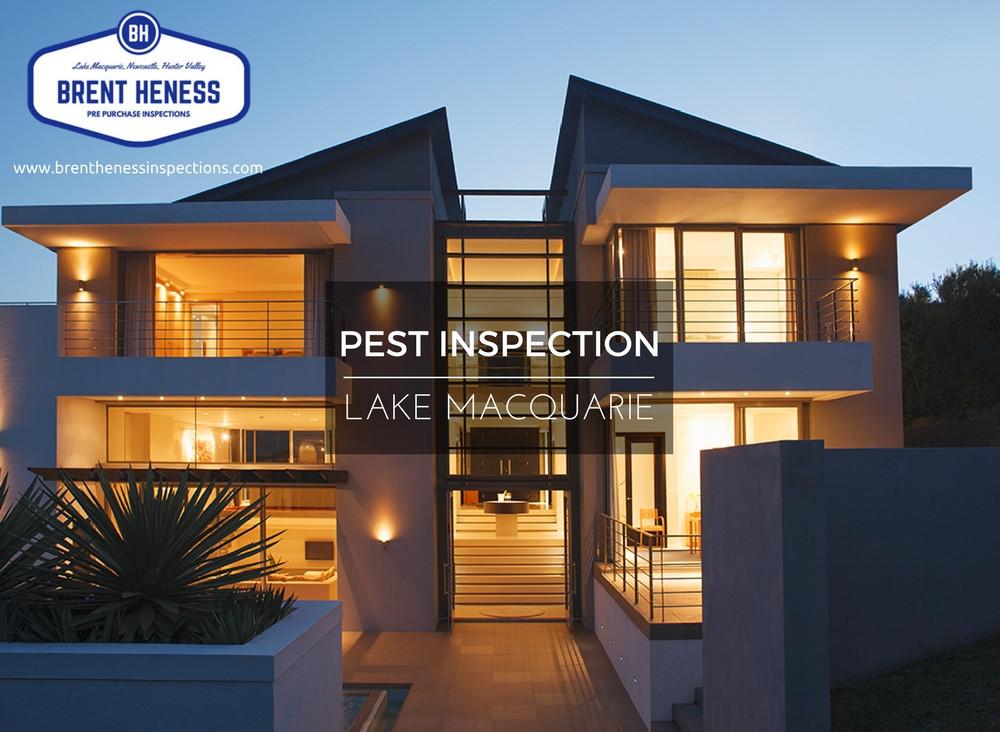 Pest Inspection Lake Macquarie