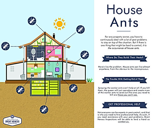 House Ants - The trouble of Getting rid of Them