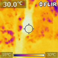 Thermal Camera Image of Terminte Nest