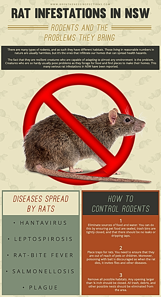 How to control rats