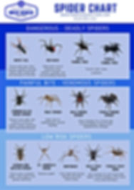 A guide to aussie spiders