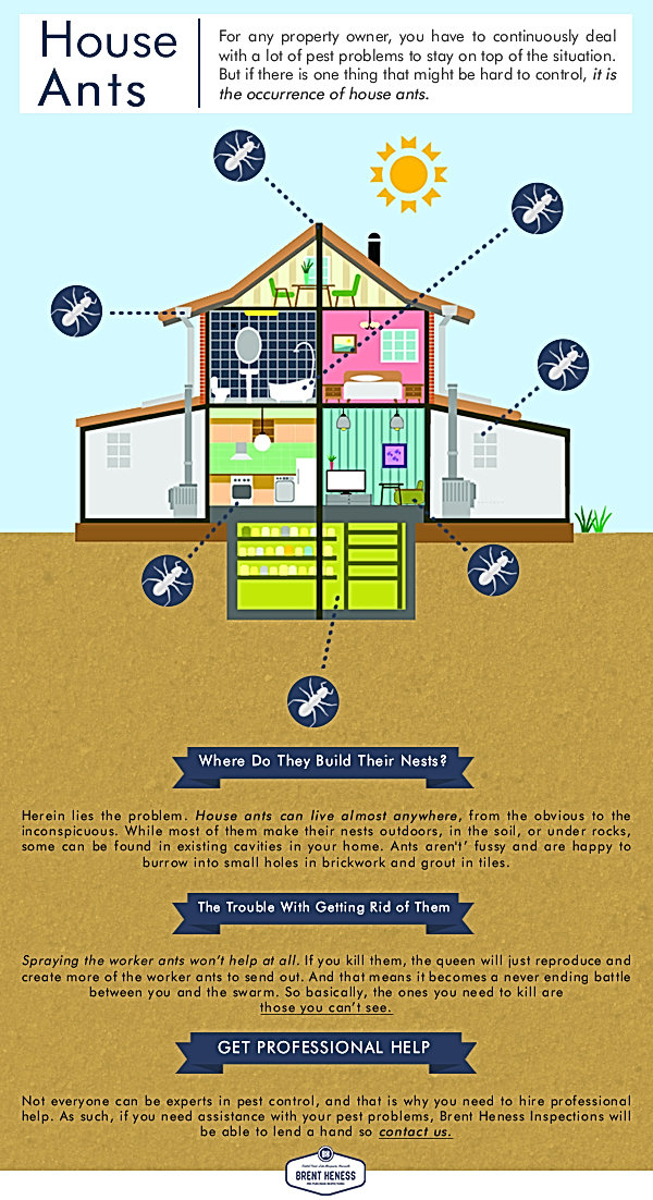 House Ants Infographic