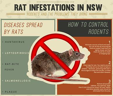 Rat Infestations in NSW