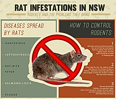 Rat Infestations in NSW