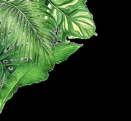 DECOR_plants.png