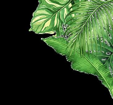 DECOR_plants_edited.png