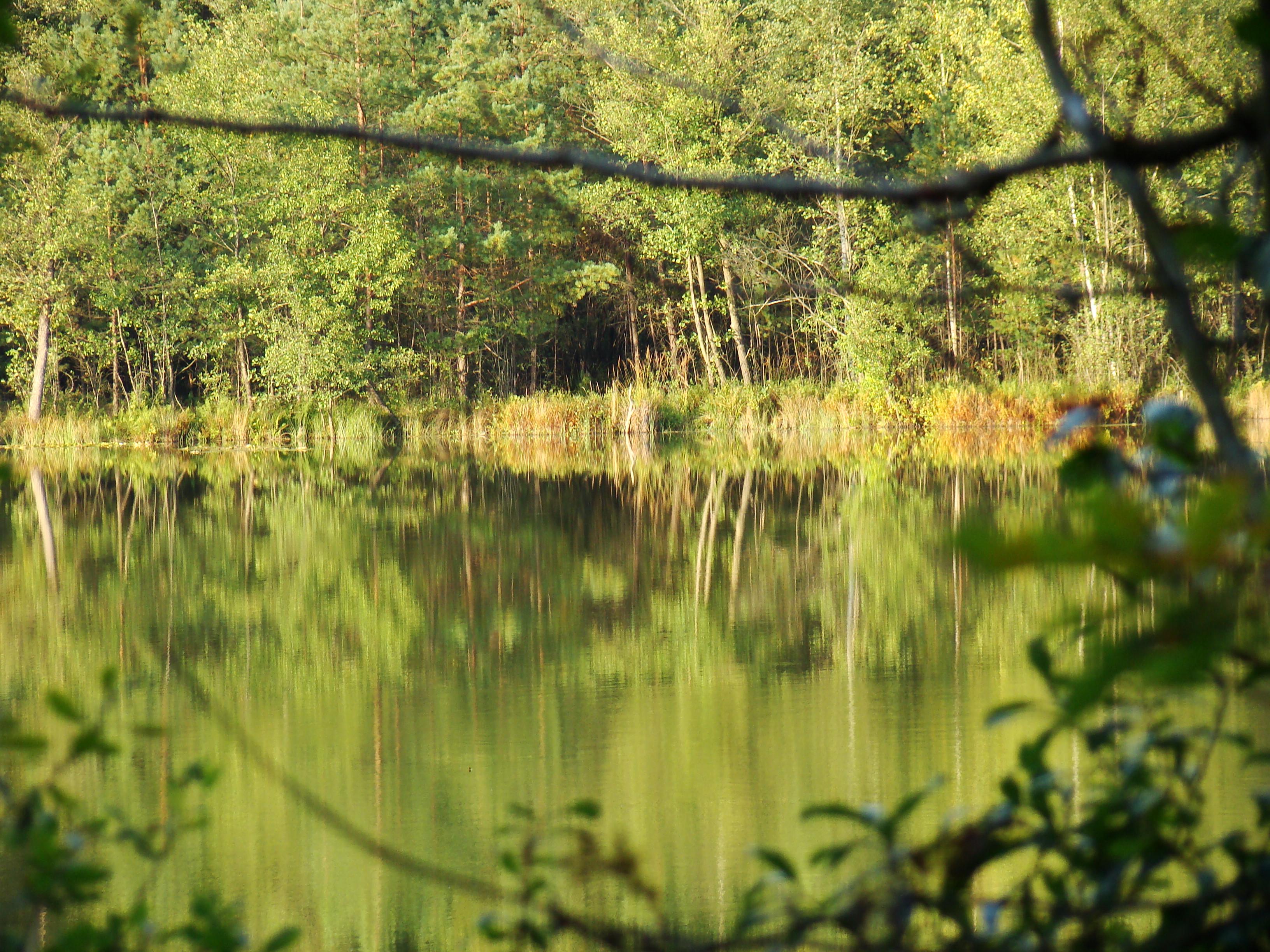 Oczka wodne ukryte w lesie