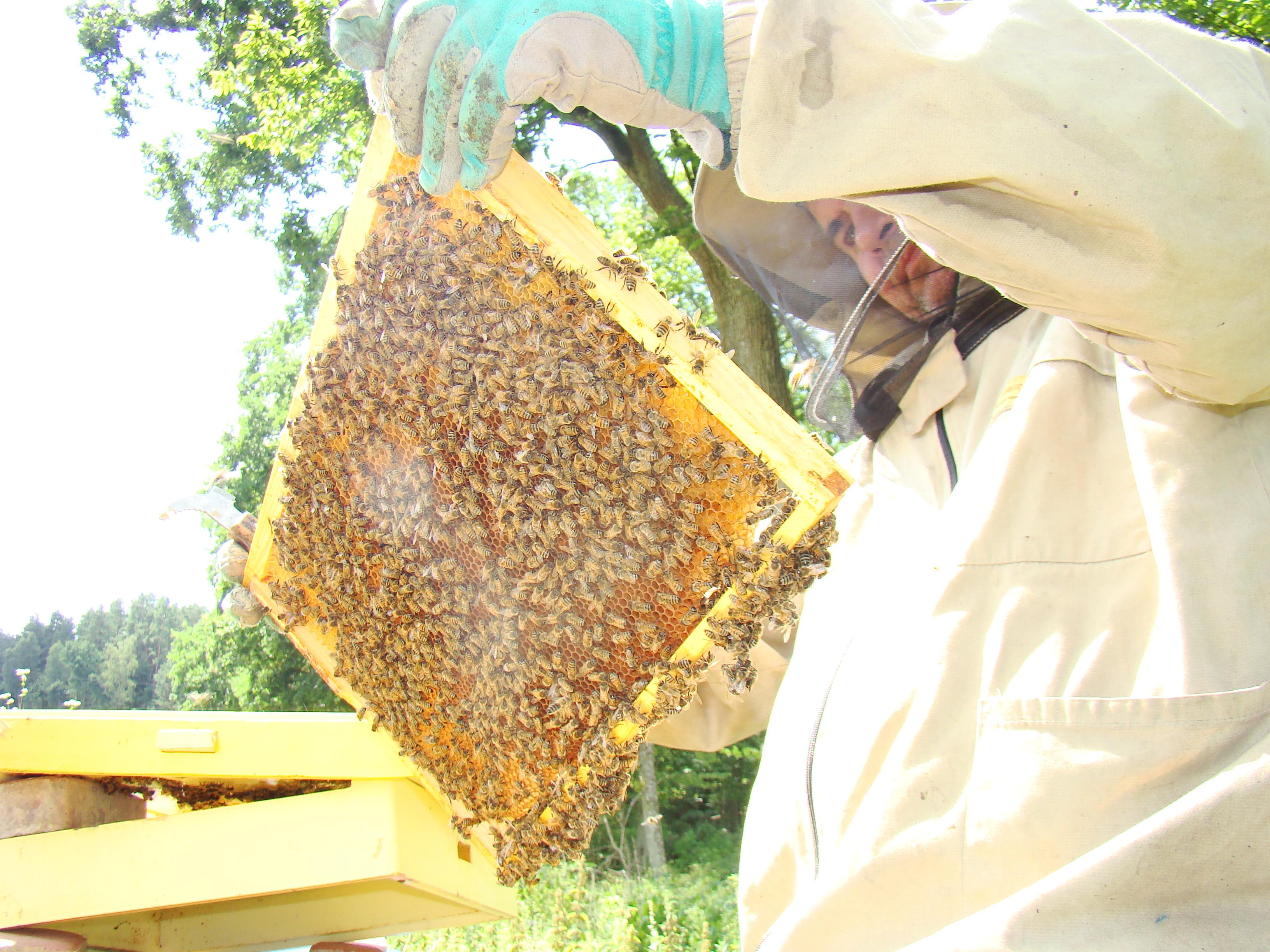 Pszczelarz w akcji