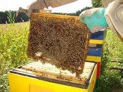 Ramka z pszczołami