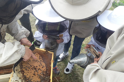 Kurs Pszczelarski dla Początkujących 2021 - z wyżywieniem i noclegiem