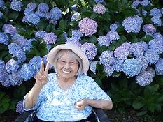 令和2年6月 紫陽花見学