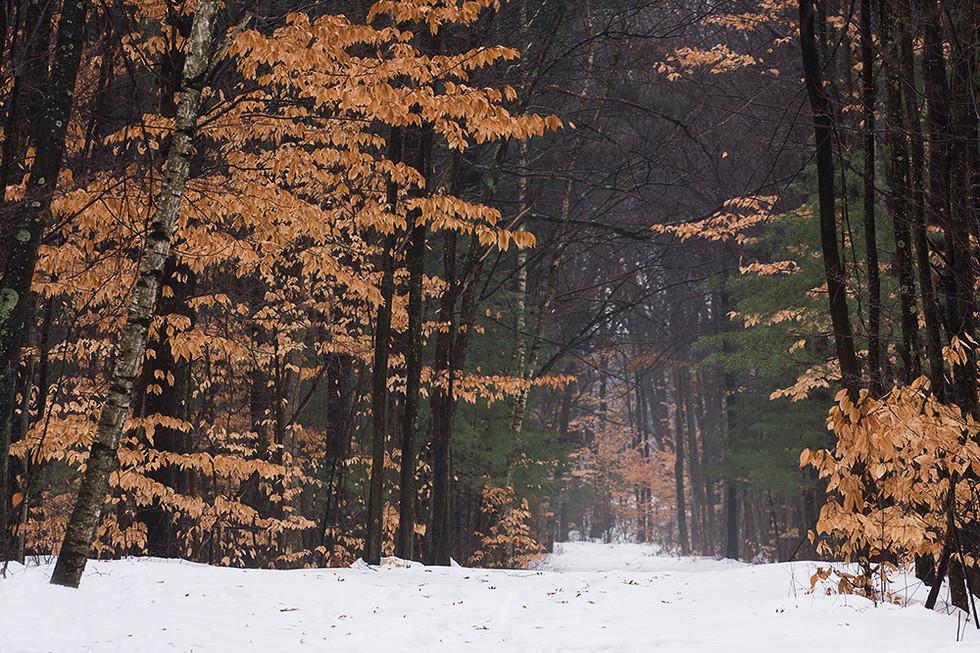 IMG_2912-beech-forest.jpg