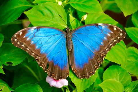Wings of Blue