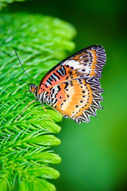Wings of Orange