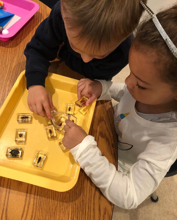 science - exploring bugs