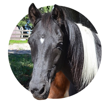 Horses_Trinity.png