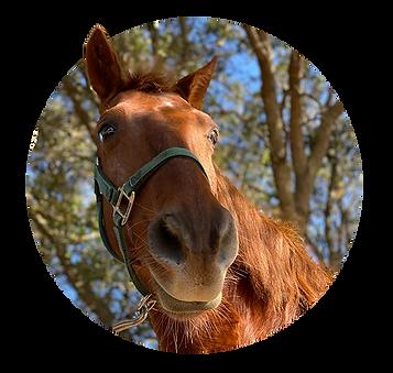 Horses_Louie.png