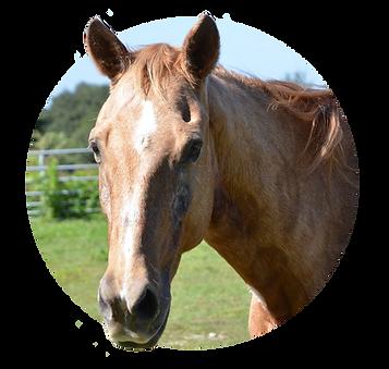 Horses_Slim.png