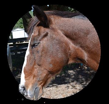 Horses_Stoli.png